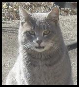 11th Feb 2011 - True Blood Cat?