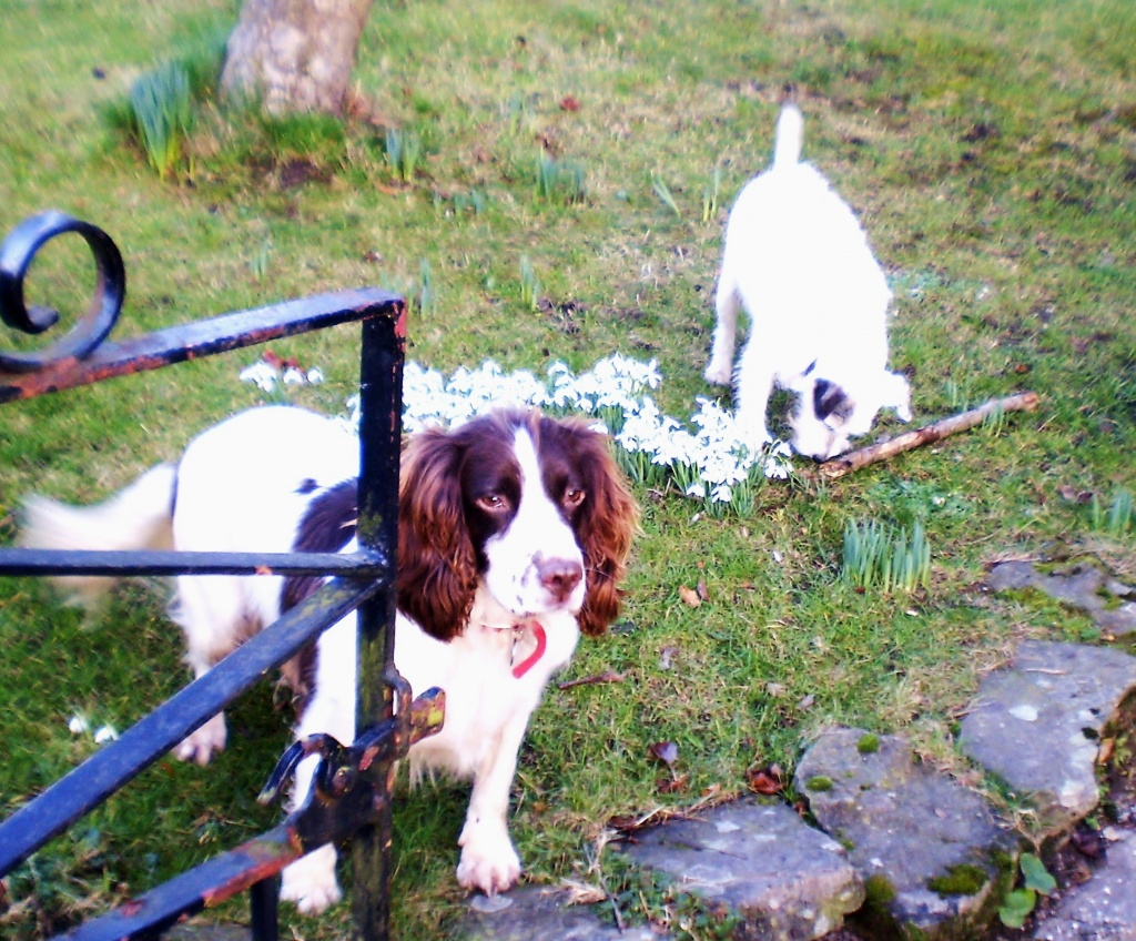 Two dogs one stick. by snowy