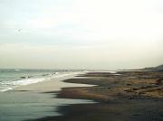 13th Feb 2011 - Beach