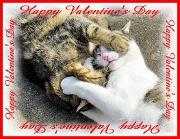 14th Feb 2011 - Kitty Kisses