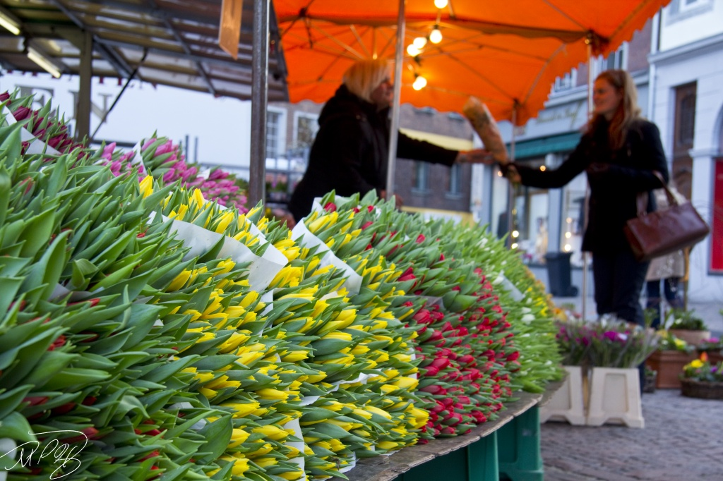 Tulips Anyone? by harvey