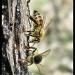 Honey, I shot the bees! by cjwhite