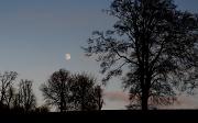 30th Nov 2009 - Winter Moon