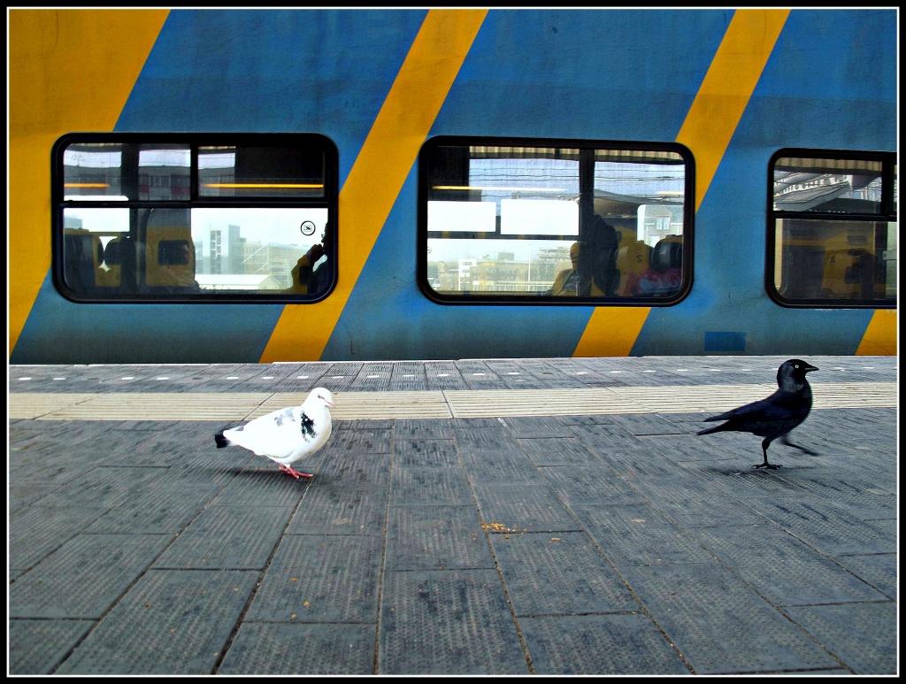 Birds by halkia