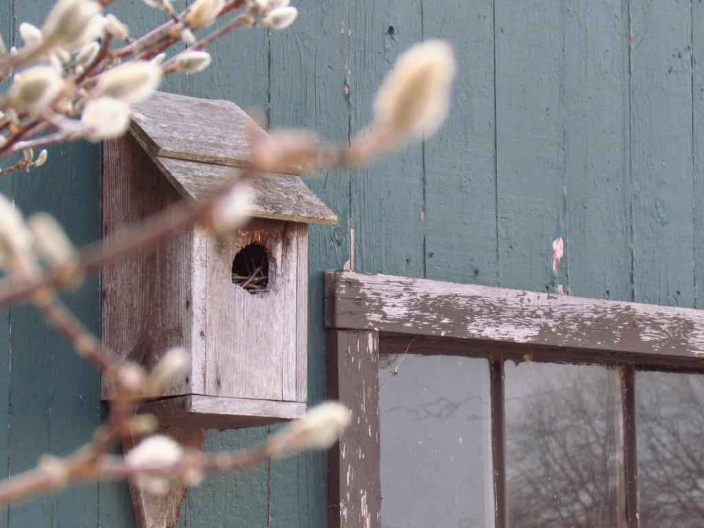 Anybody Home? by juletee
