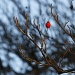 Hawthorn Berry by robv