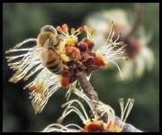 18th Feb 2011 - Bee Happy