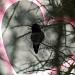My Mom ♥ Hummingbirds by kerristephens