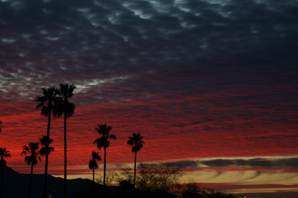 Pink Sunset with Palm Trees by kerristephens