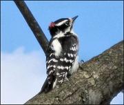 22nd Feb 2011 - Ruffled Feathers