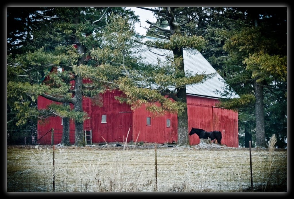 Horse Barn by bluemoon