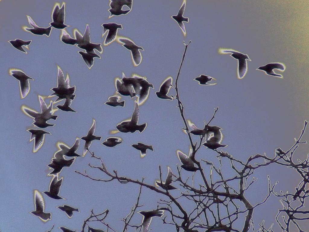 Birds scattering by sabresun