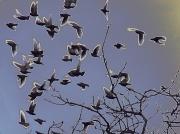 25th Feb 2011 - Birds scattering
