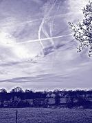 26th Feb 2011 - Morning blues (or 'Ayeup')