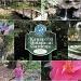 Kanapaha Botanical Gardens by allie912