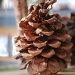 pinecones.... by earthbeone