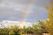 1st Mar 2011 - Rainbow