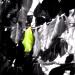 Green Leaf by mej2011
