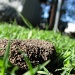 Ants nest by loey5150