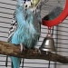 Wet Budgie - what a funny sight by loey5150