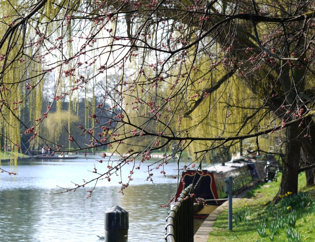 Spring on the river by judithg