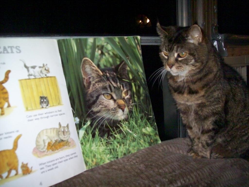 Sagwa the Tabby Cat by julie