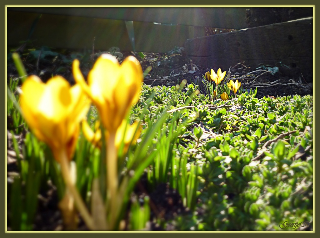 Signs of Spring!  by geertje