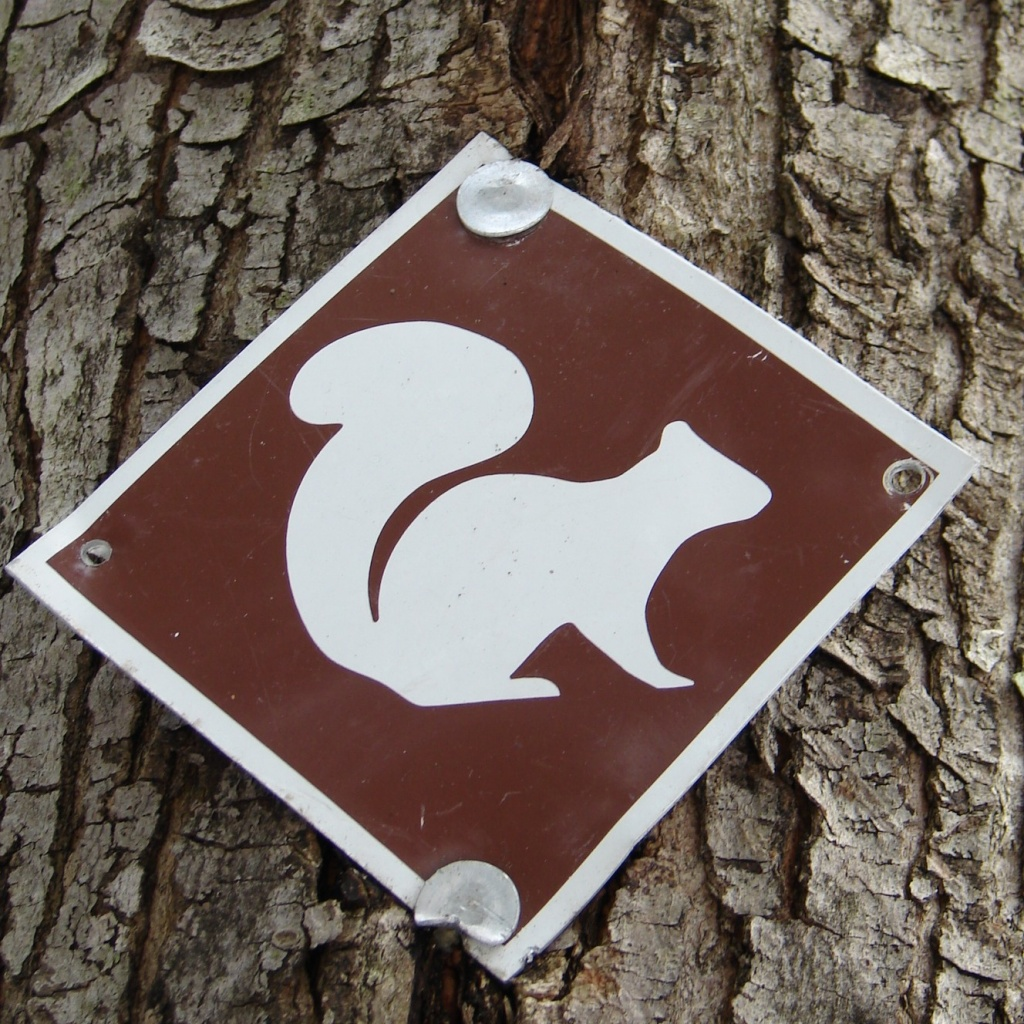 Squirrel Trail by brillomick