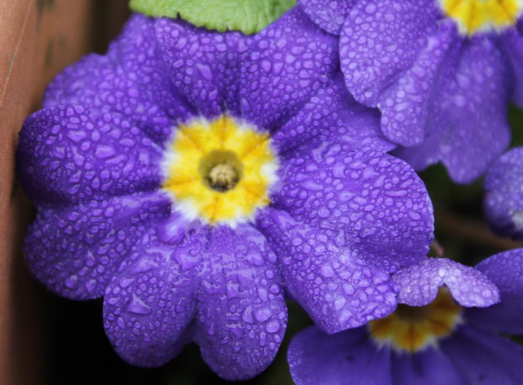 Blue by daffodill