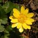 Yellow spring. 2 by pyrrhula