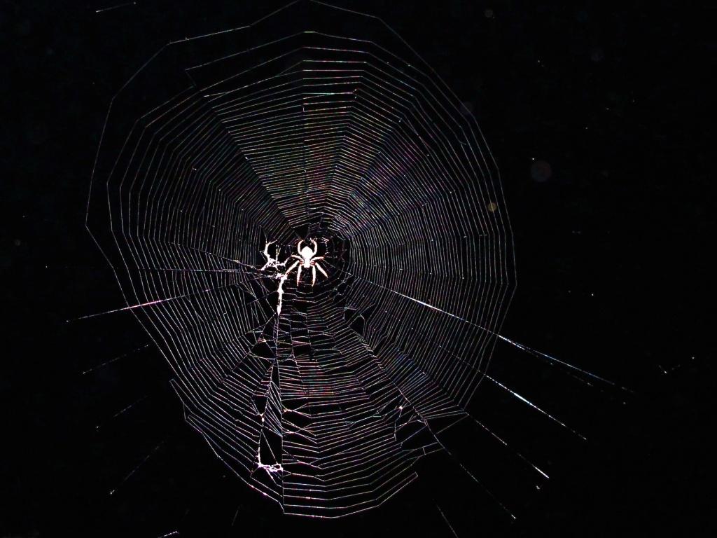 Orb web by alia_801