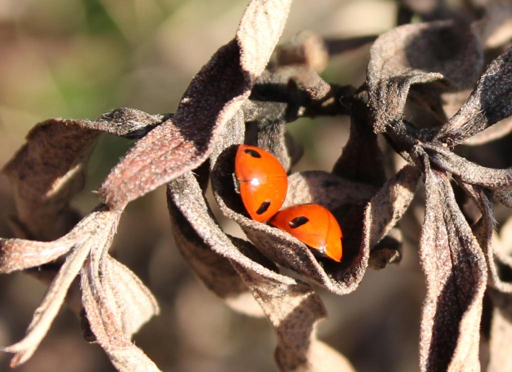 Snug As A Bug by daffodill