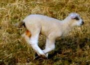 16th Mar 2010 - Day 75: 16-03-10