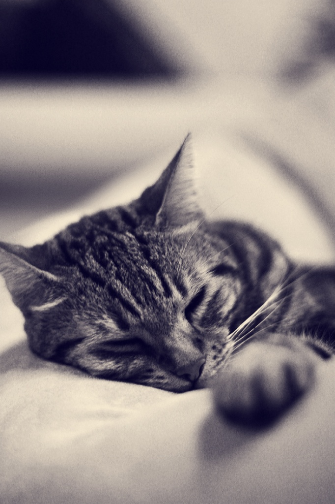 sleeping Milo by pocketmouse