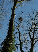 18th Mar 2011 - Treetop
