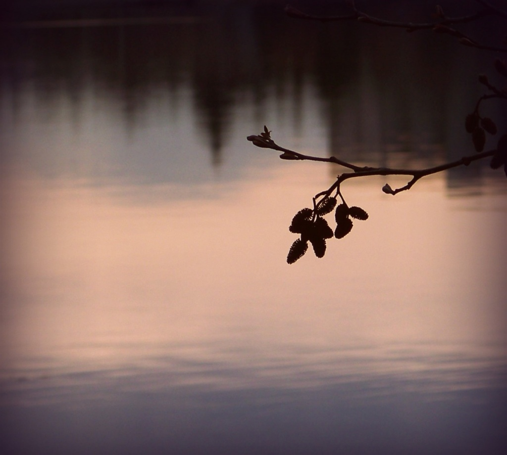 3-18-11 Morning Waters by shantwin