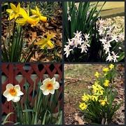 16th Mar 2011 - Flowers in Virginia