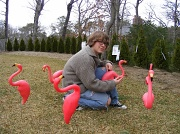 20th Mar 2011 - You've Been Flocked