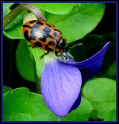 21st Mar 2011 - Ladybug, Ladybug, Don't Fly Away!