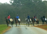 22nd Mar 2011 - The Gallops