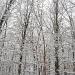 Snow Day by olivetreeann