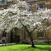 Beautiful Blossom by helenmoss