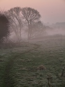 25th Mar 2011 - Morning walk with the mist