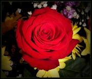 27th Mar 2011 - Love
