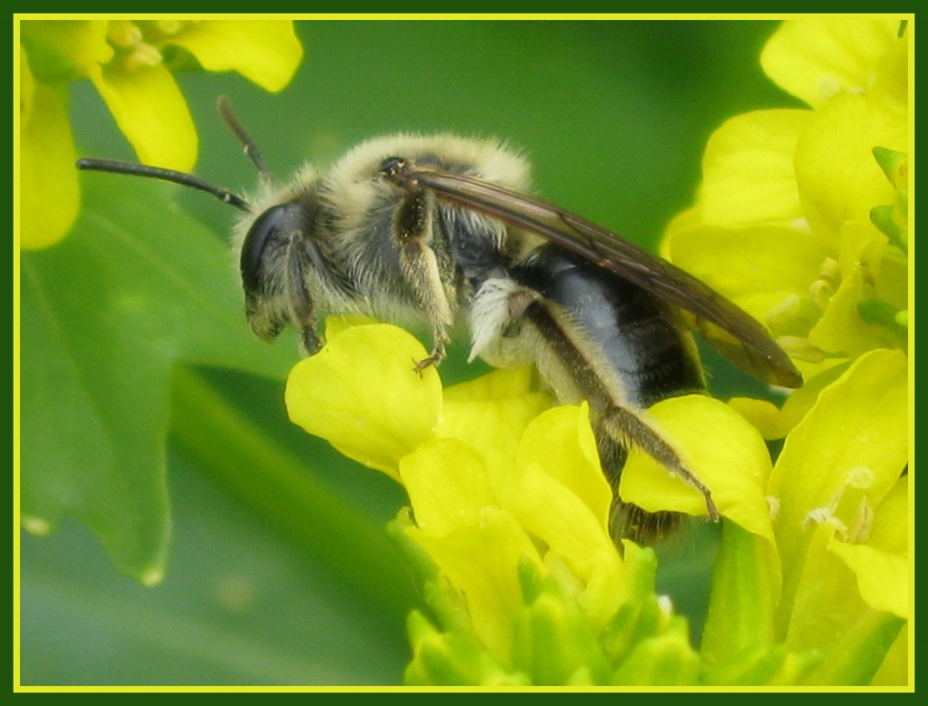 I never knew bees were so fuzzy! by cjwhite
