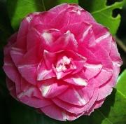 30th Mar 2011 - Flower