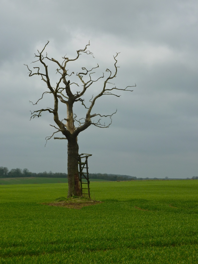 Solitary Tree by helenmoss