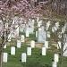 Arlington Cemetery by dmrams