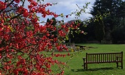 31st Mar 2011 - Bench and Blossom