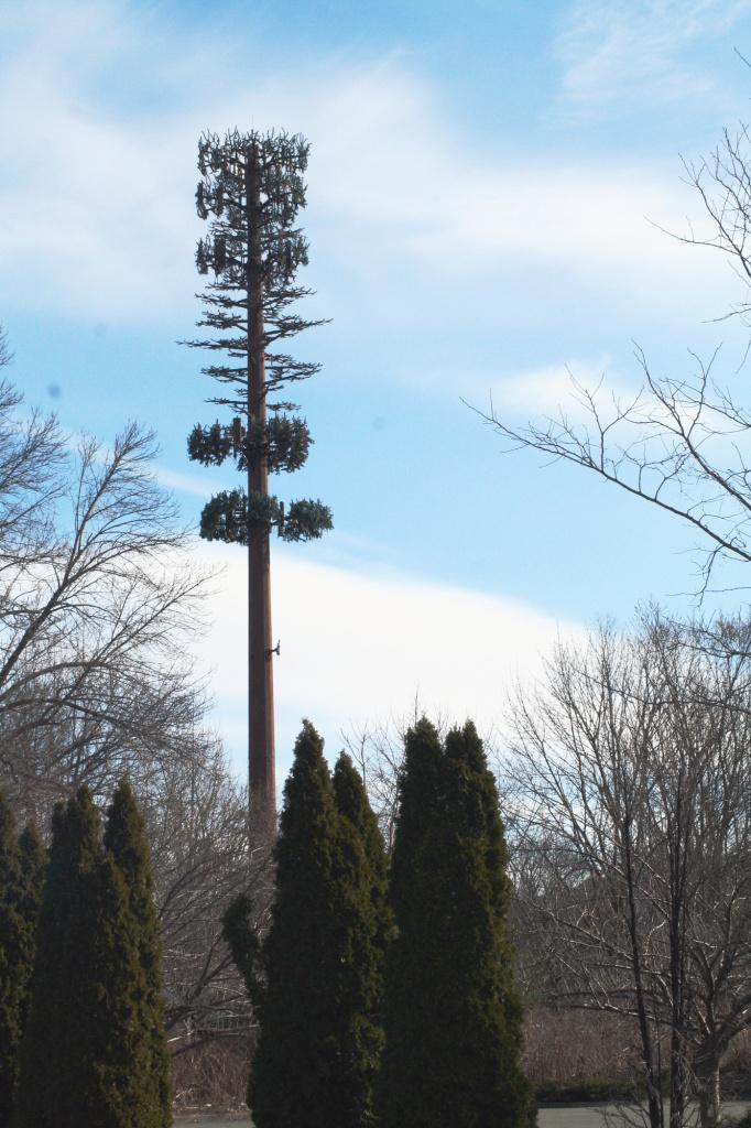 Verizon Pine by hjbenson